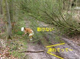 2008032906.jpg