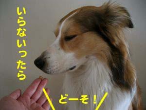 2008041004.jpg