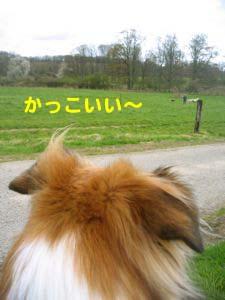 2008041408.jpg