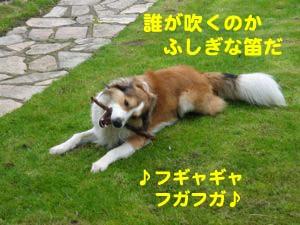 2008041905.jpg