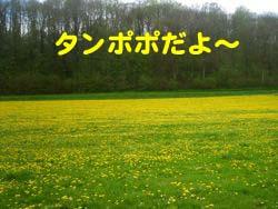 2008042514.jpg