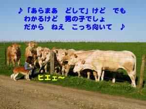 2008042609.jpg