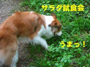 2008050204.jpg