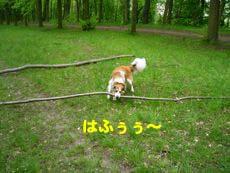 2008050211.jpg