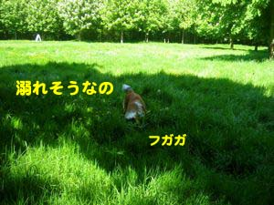 2008050811.jpg