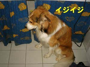 2008061303.jpg