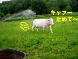 2008061404.jpg