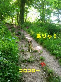2008061805.jpg