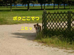 2008061807.jpg