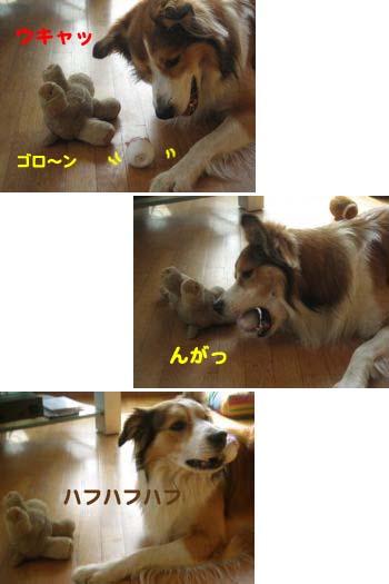 2008061903.jpg