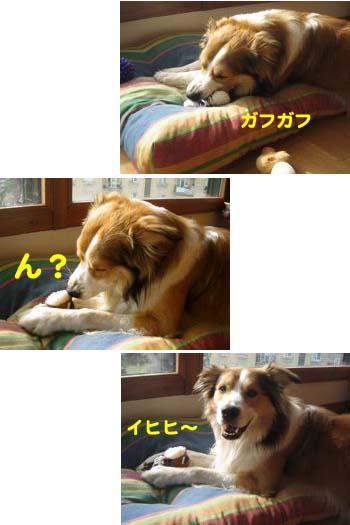 2008061904.jpg