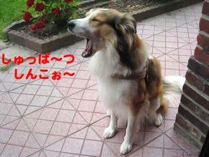 2008062203.jpg