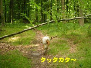 2008062209.jpg