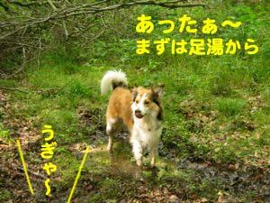 2008062211.jpg
