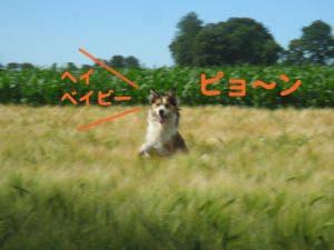 2008062409.jpg