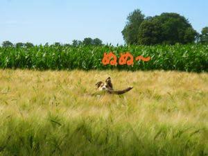 2008062410.jpg