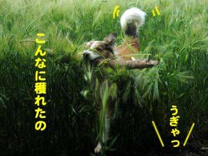 2008062411.jpg