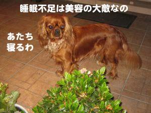 2008062806.jpg