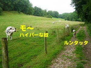 2008071203.jpg