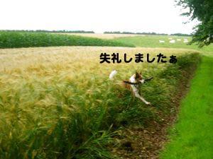 2008071207.jpg