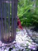 20080124/赤ビー抱卵