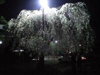 20080412/松本城 夜桜03