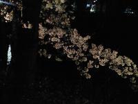 20080412/松本城 夜桜05