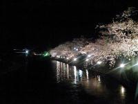 20080412/松本城 夜桜06