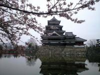 20080412/松本城 桜01