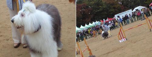 11-2-oosakazyo-3.jpg