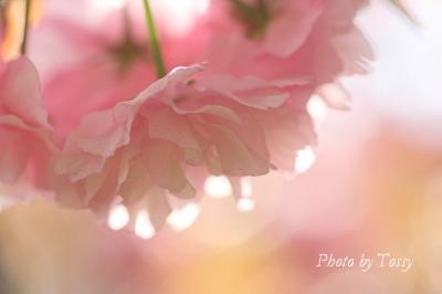 写真クリックで 花日記「今日の花」にジャンプします