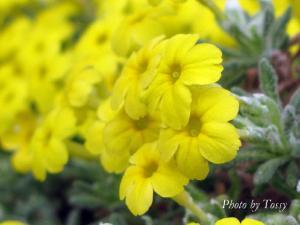 今日の花は写真を クリックでね