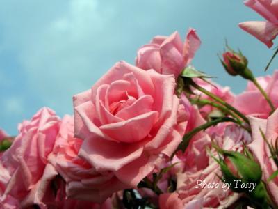 写真をクリックで 花日記「今日の花」へ