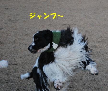DSC_0537_20081230005745.jpg