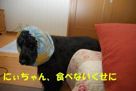DSC_0630_20081122232433.jpg