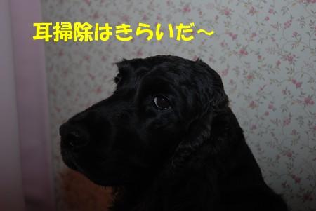 DSC_0885_20090110230517.jpg