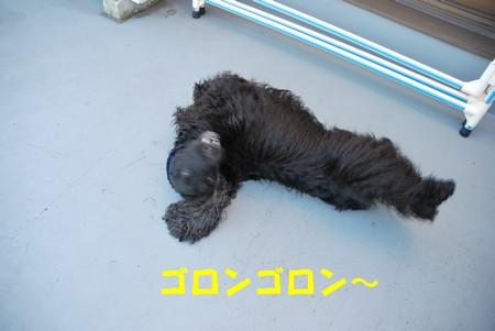 DSC_1050_20090206224310.jpg