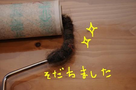 DSM_0197.jpg