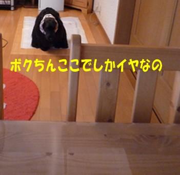 P1030791.jpg