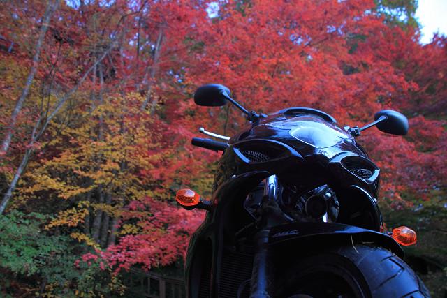 秋の信州003