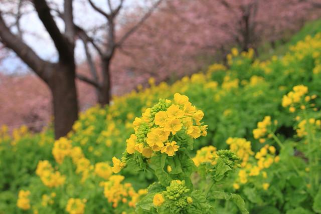 松田山015