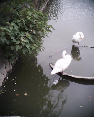 白鳥の湖:R2