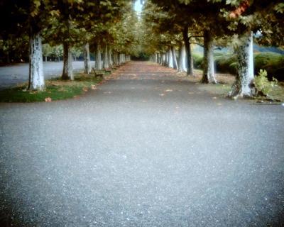 誰もいない雨上がりのプラタナス並木:Entry