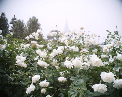 バラと霞むドコモタワー:Entry
