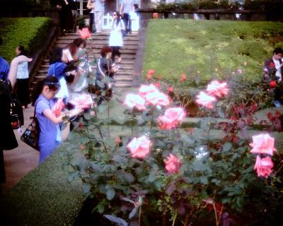バラを撮る:Entry