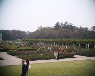 神代植物公園のバラ園:R2