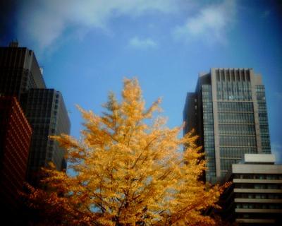 丸ビルとイチョウの木:Entry