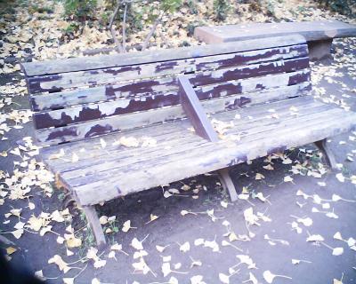 ベンチの落ち葉:R2