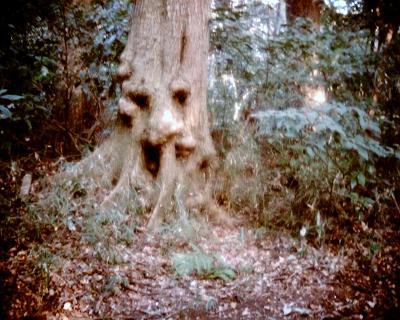 木の精:Entry