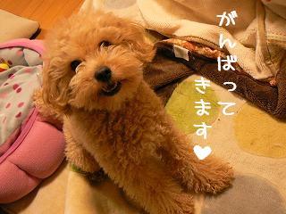 がんばりましゅ0215